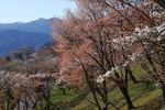 Resized  (美の山) (4).jpg