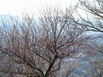 Resized 葛城山パノラマパーク‥ (13).jpg