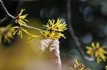 Resized 春の花‥ (2).jpg