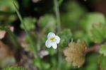 Resized 春の花‥ (7).jpg