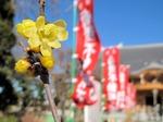 Resized 初詣‥(上尾遍照院) (3).jpg
