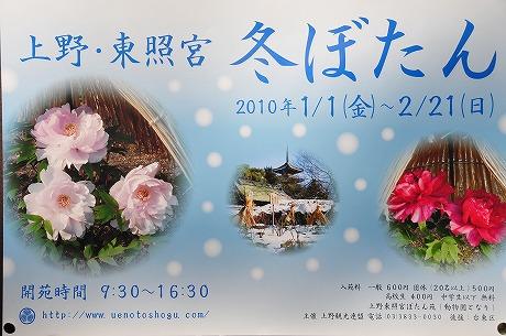 Resized 上野東照宮の冬ぼたん‥(2010年).jpg