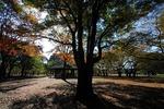 Resized 代々木公園‥ (11).jpg