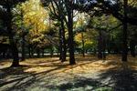 Resized 代々木公園‥ (9).jpg