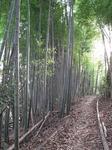 Resized 冬枯れの自然観察公園‥.jpg