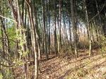 Resized 冬枯れの自然観察公園‥ (5).jpg