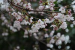 Resized 桃と菜の花など‥ (6).jpg