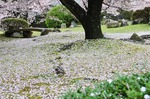 Resized 姫路城‥(西の丸) (15).jpg