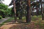 Resized 敷島公園‥.jpg