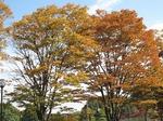 Resized 平塚公園‥ (8).jpg