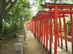 Resized 根津神社の躑躅まつり‥ (11).jpg