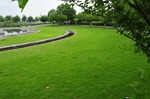 Resized 真夏の公園‥(川島町) (8).jpg
