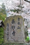 Resized 長妙寺のしだれ桜‥(須坂市) (7).jpg